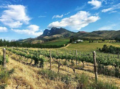 Marianne's Sauvignon blanc vineyards (photo courtesy of Marianne)